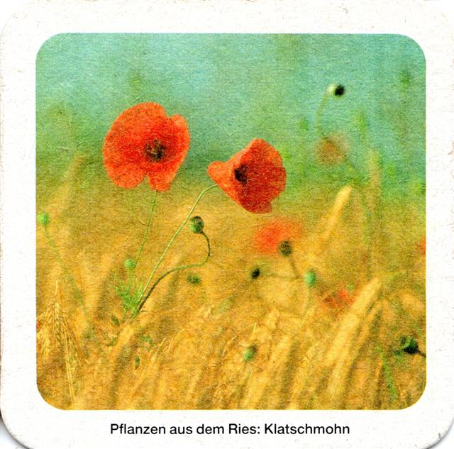 oettingen don-by oettinger orig 4b (quad180-pflanzen-klatschmohn)